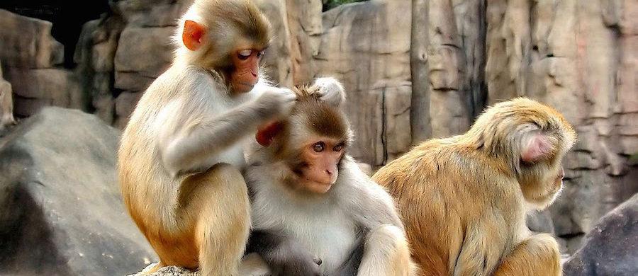 conte-mones-zoo-parc-sandra-gomez